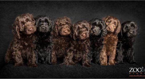 jenny-marshall-puppies-fb