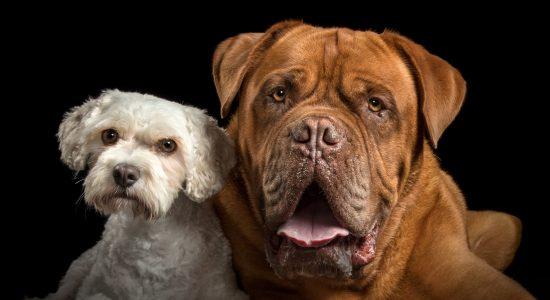 Best pals
