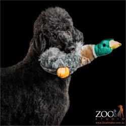 duck in mouth poodle
