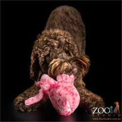 playing with soft toy brown labradoodle