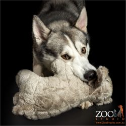 husky chewing soft toy