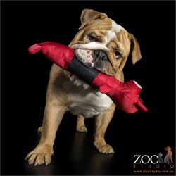 red toy in mouth english bulldog