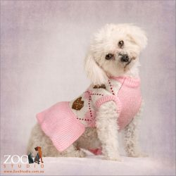 chic white bichon in pink jumper