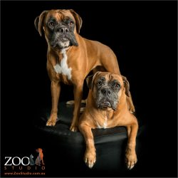 standing and sitting pair red boxers