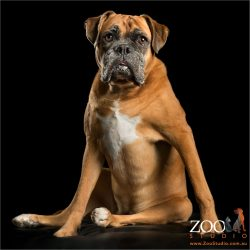 sitting female red boxer