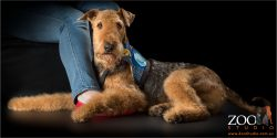 medical alert airedale hugging his human