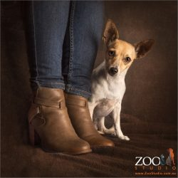 moni fox terrier cross with mum in boots