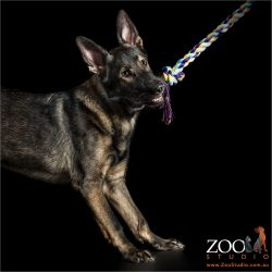 german shepherd playing with tug rope