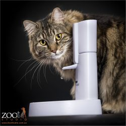 main coon cross cat drinking from water fountain