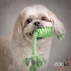 green rope in mouth shih tzu maltese cross