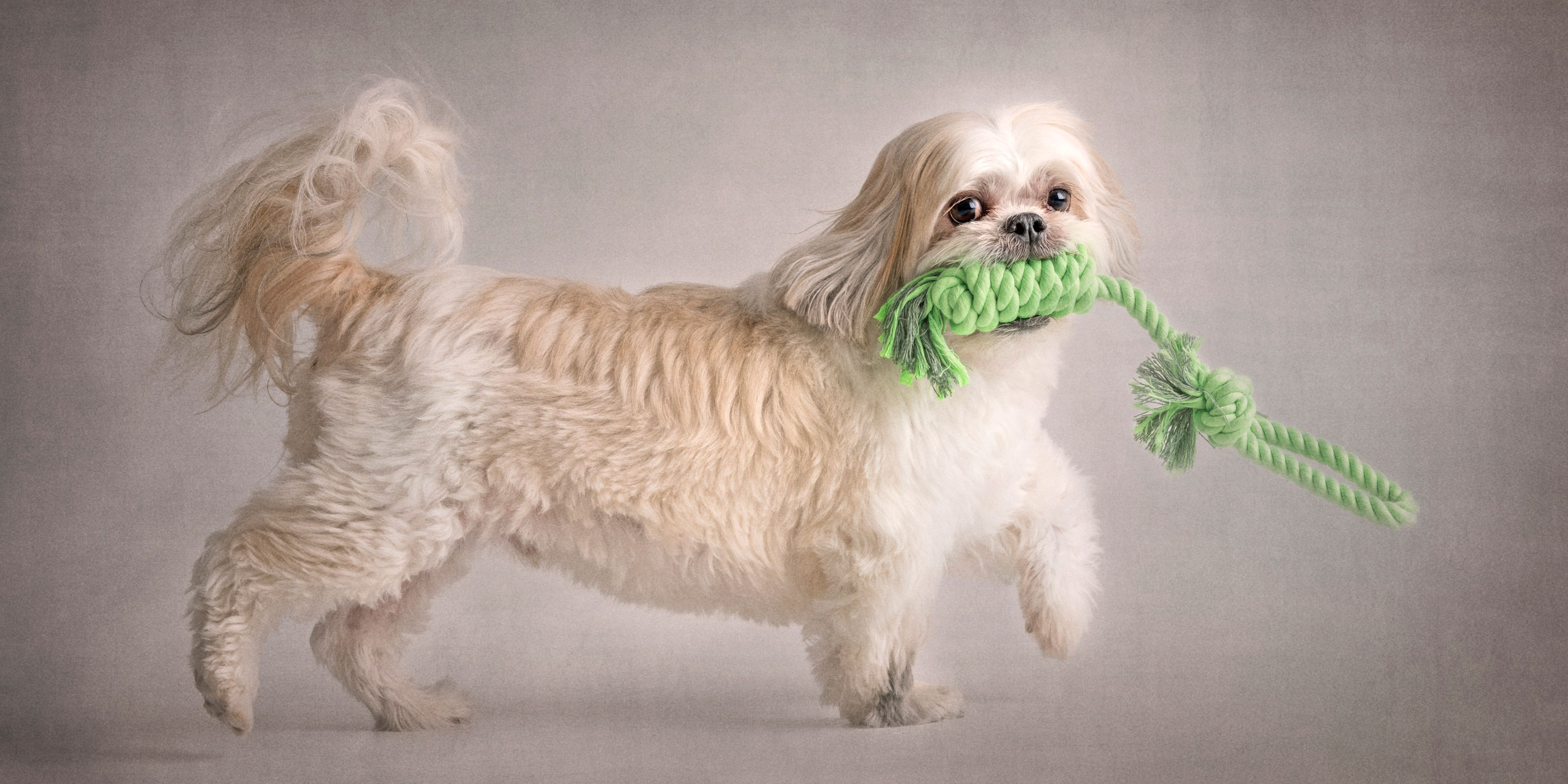 prancing shih tzu maltese cross with green rope