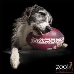 mareema cross chewing on maroons football