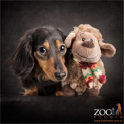 best pals sheep toy and black and tan dachshund