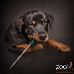 handyman rottweiler with screwdriver