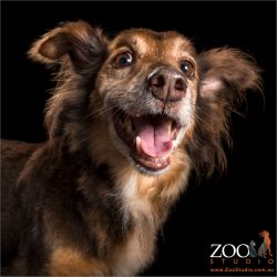 open mouthed happy smiling mixed breed dog