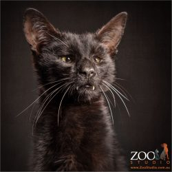 blind but beautiful tiny black moggy