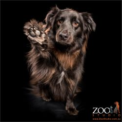 high fiving fluffy black mixed breed