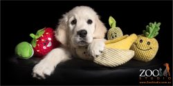 golden retriever puppy with fruit toys