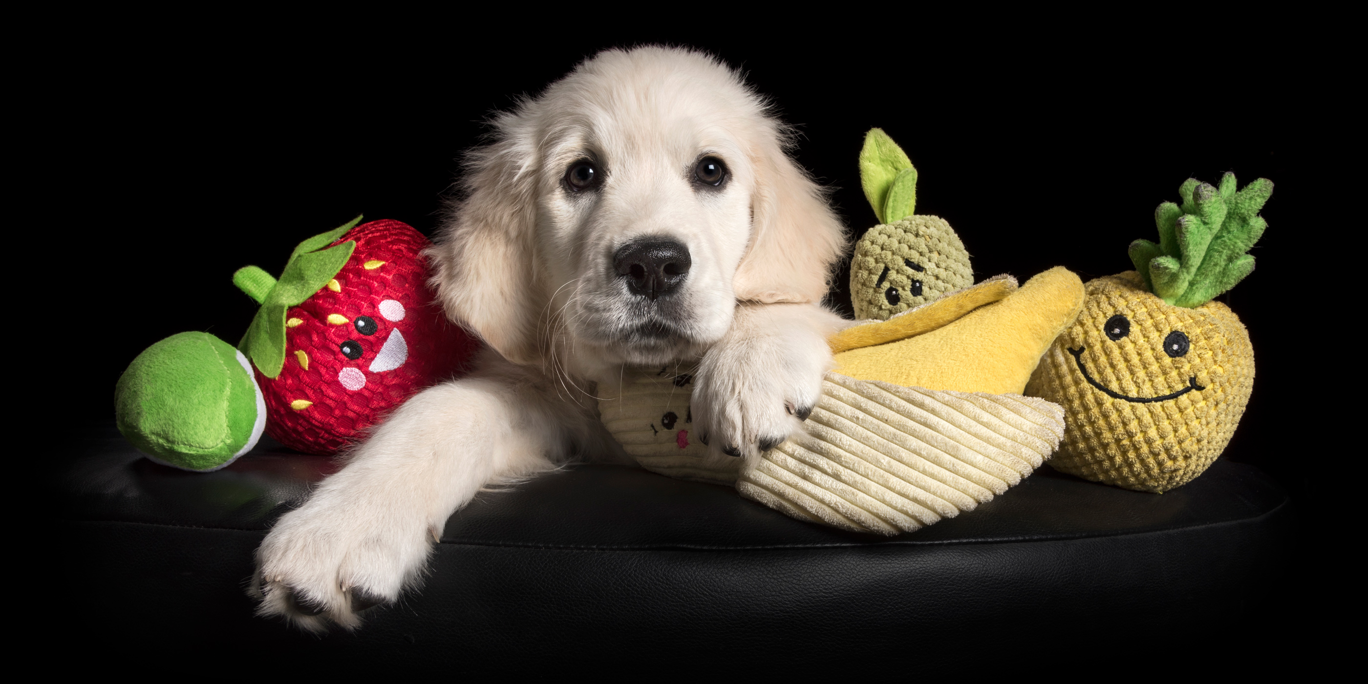 white pup golden retriever surrounded by fruit toys