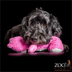 black poodle resting on hot pink stuffed toy
