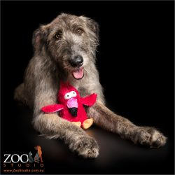 irish wolfhound with cuddle toy