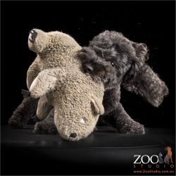 black poodle cross romping with toy teddy