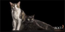 tortoiseshell and black cat fur-siblings