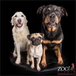 trio of unlikely fur siblings