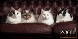 four cats together on a couch