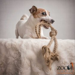 jack russell playing with long rope toy