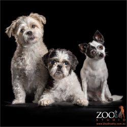 trio of fluffy fur-siblings