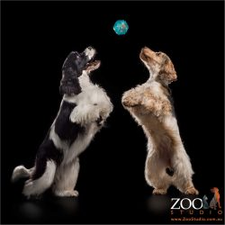 dancing dogs jumping for blue ball