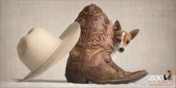 miniature fox terrier peeking from behind pair of boots