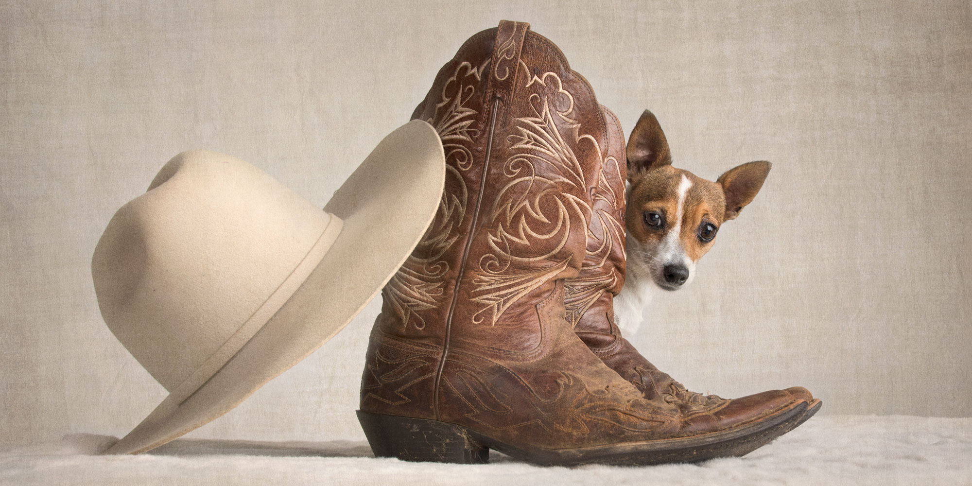 cowboy boots hat and miniature fox terrier girl