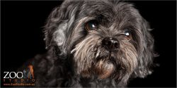 soulful face close up maltese cross girl