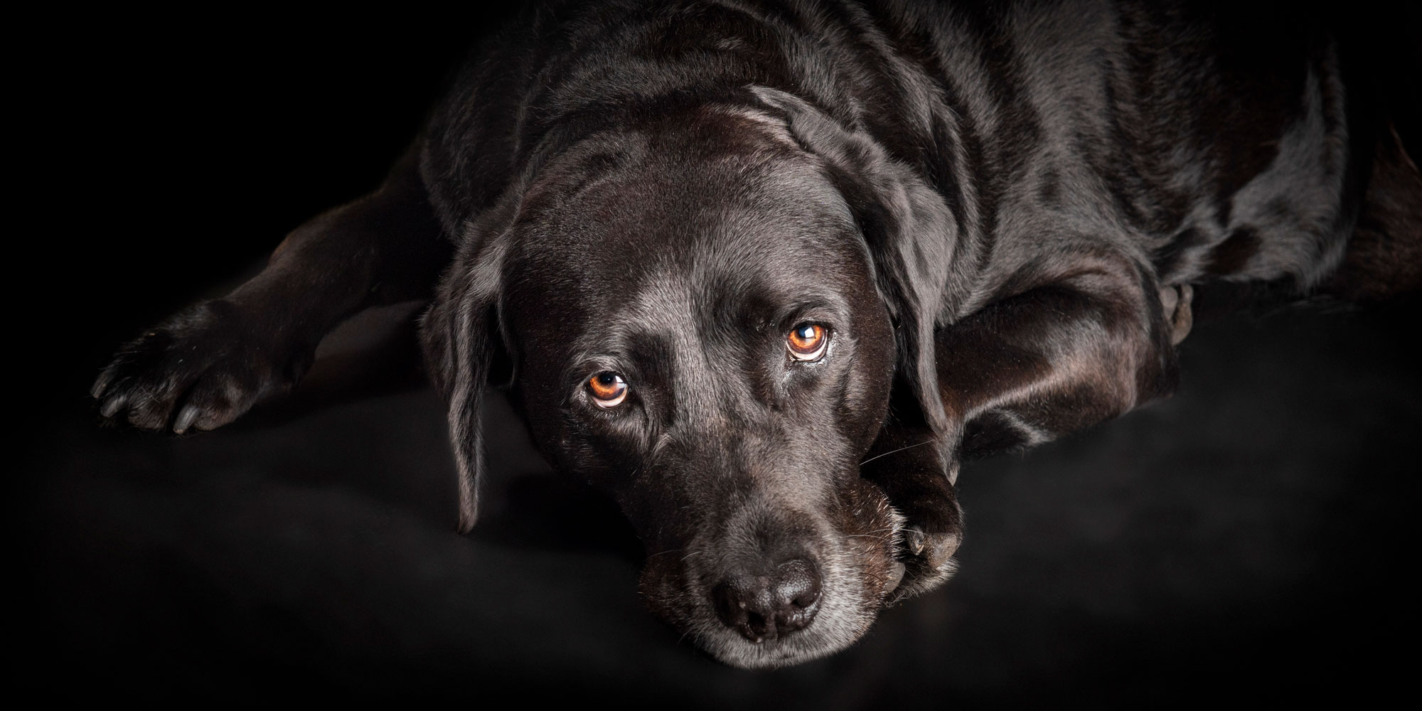 pretty black girl labrador eyes looking up