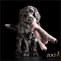 happy girl cocker spaniel with teddy bear in mouth