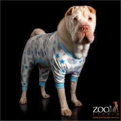 snappy dresser boy shar pei in his pyjamas