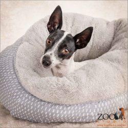 snuggled in bed female mini fox terrier cross