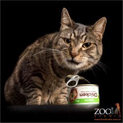 Tabby opening can of food.