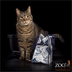 Cat ready to go on holidays.