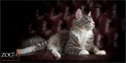 Gorgeous cat relaxing on a sofa.