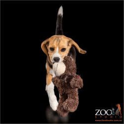 Cute Beagle puppy playing with a stuffed toy.