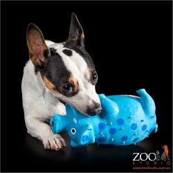 Cute Fox Terrier playing with his toy.
