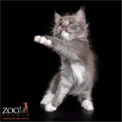 Lovable kitten in a playful mood.