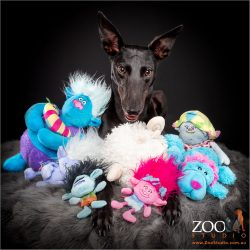 Sweet black Greyhound with his collection of toys!