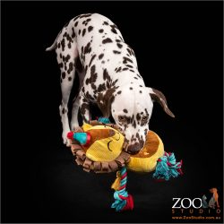 Gorgeous Dalmation puppy playing with a toy.