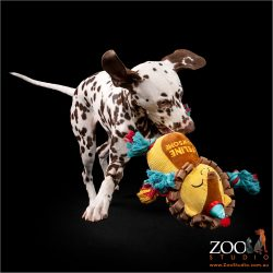 Sweet Dalmation puppy playing with a toy.