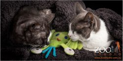 A pair of sweet DSH cats playing together.