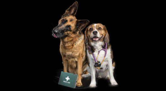 blood-donor-dogs-cats-melbourne-pet-photography-studio-pet-photographer